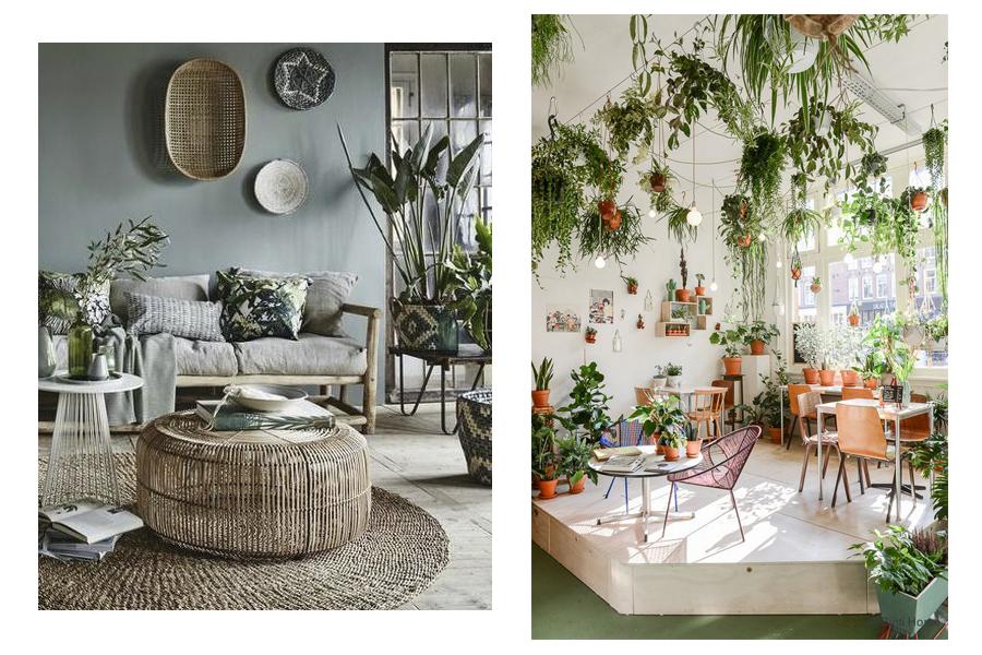 fotos plant - Tendències de decoració per aquest 2019!