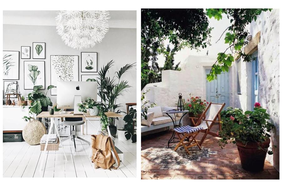 fotos plantes - Decora casa teva sense gastar molts diners!